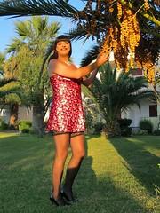 Sunshine stockings