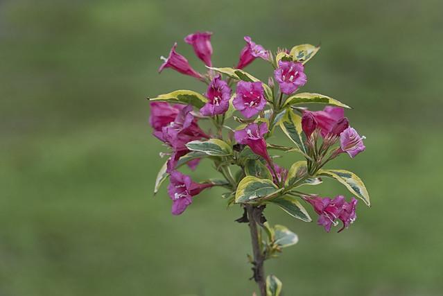 Have A Bouquet - B051215-080802