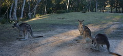 Locals in the camp and picnic ground