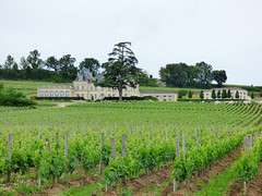 St Emilion - vineyards (3)