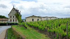 St Emilion - vineyards (6)