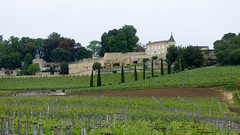 St Emilion - vineyards (5)