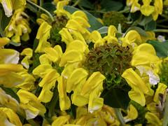 St Emilion - flowers