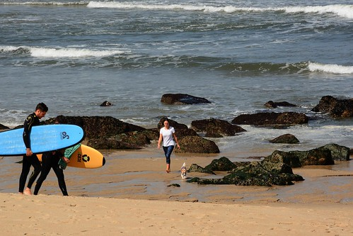 The surfers, the girl and her dog