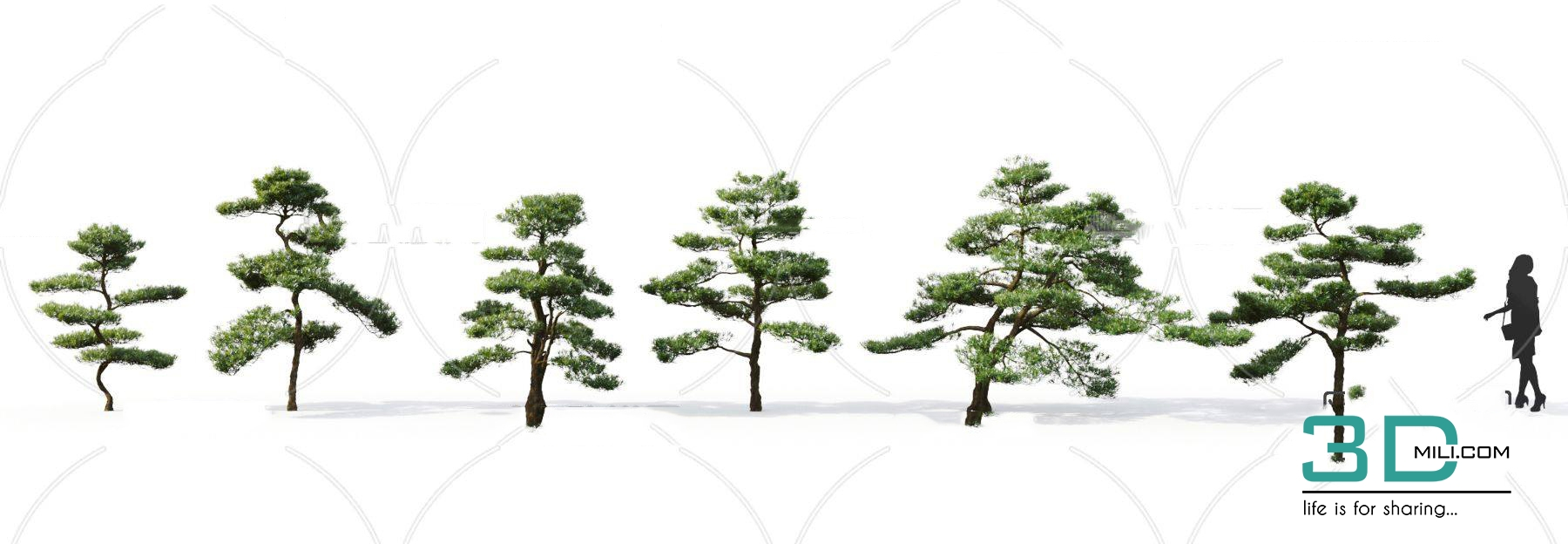 69  Bonsai Tree 3dsmax File Free Download - 3D Mili - Download 3D