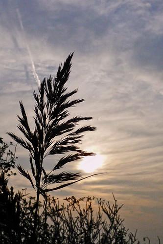 Sunset ... (1190259)