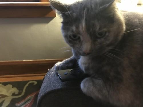 Chooch with Remote