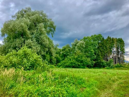Meadow and trees near Kiefersfelden, Bavaria, Germany