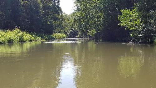 Houtvaart vanuit de kano