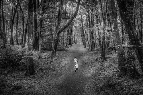 Into the woods  #nikon #35mm1.8dx #d5500 #woodland #b&w