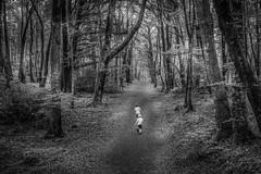 Into the woods  #nikon #35mm1.8dx #d5500 #woodland #b&w