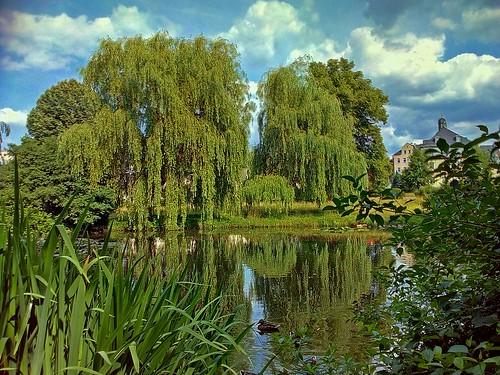 Teich im Ellefelder Park/Vogtland