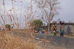 summer dry, choli