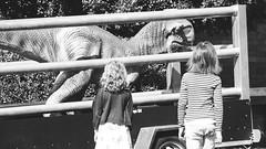Jurassic Petting Zoo