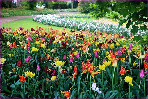 Floralia Brussels, Parc du Château de Grand Bigard, Dilbeek, Brabant flamand, Belgium