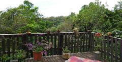 The deck over the forest at Morada Panapanã ...
