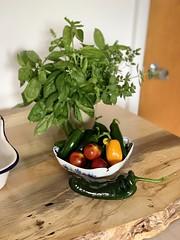 Image by valatal (vmolloy) and image name garden goodies #grewitmyself #backyardgarden #basil #oregano #tomatoes #peppers photo
