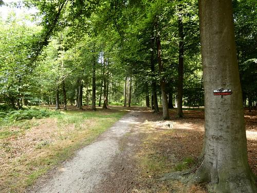 Bois de l'Ermitage