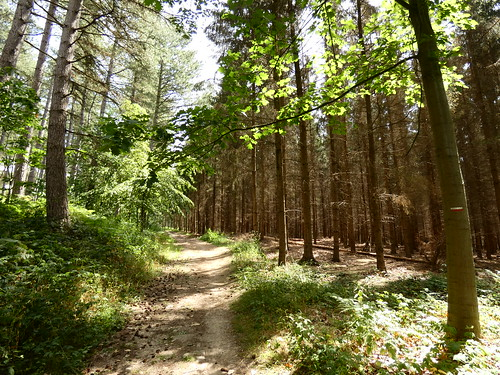 Dans les bois de Villers-la-Ville