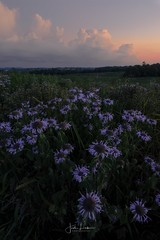 """Image by the_lowe_life (jwlowe) and image name """"Battlefield"""" photo  about I visited Perryville Battlefield Historic Site over the weekend for sunset. There are many trails with wildflowers and the compositions are limitless"""