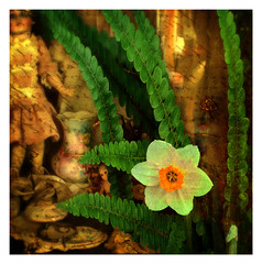 Flower and Ferns