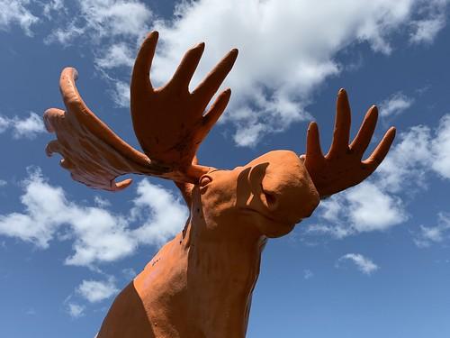 The Orange Moose