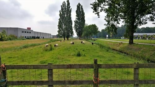 Aalsmeer-Uithoorn 6