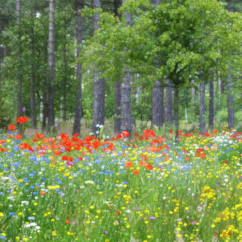 Flower wealth
