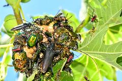 Insektenmagnet 190713 1088