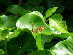 Aubterre - butterfly - Photo of Saint-Avit