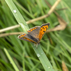 Butterflies, Moths and Insects