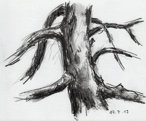 190714_Baum
