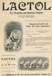 'Lactol,' Our Dogs 33 (26th July 1912), p. iv (back cover).