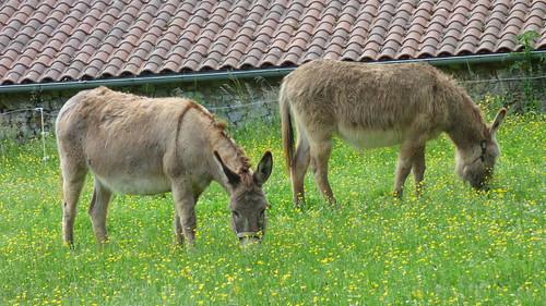 Grotte de Villars - donkeys