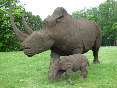 Grotte de Villars - woolly rhino