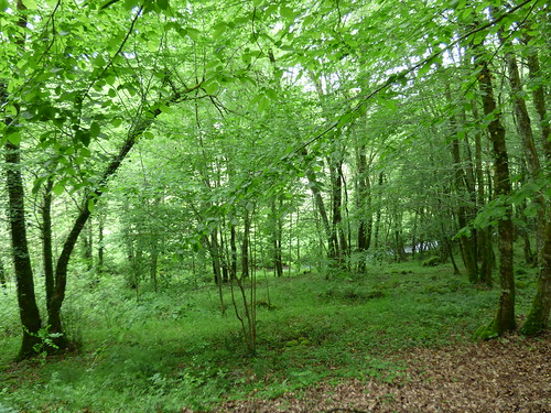 Grotte de Villars - woodland