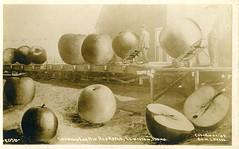 [IDAHO-J-0140] Lewiston Apples