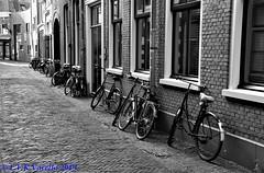 Bicicletas de Haarlem