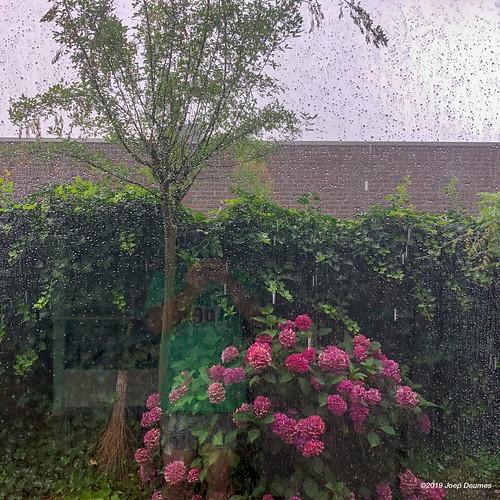 rain-2019jul20-265