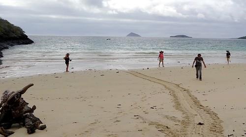 turtle tracks to the sea