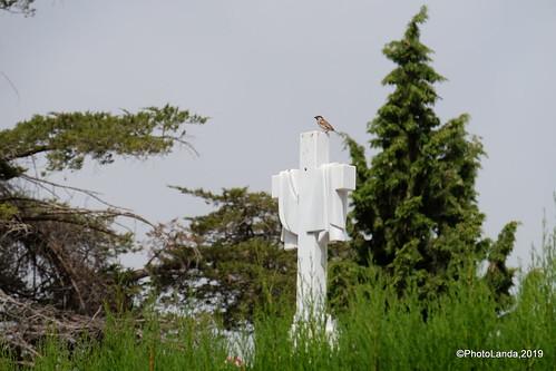 Cementerio de Alfacar