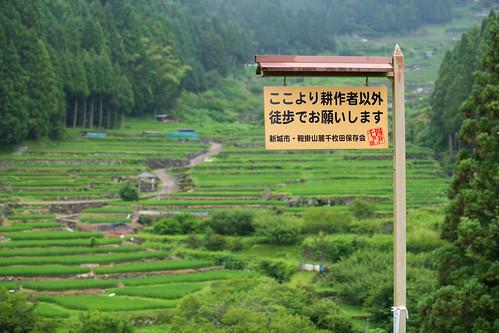 20190709 Yotsuya Terraced Rice Paddy 1