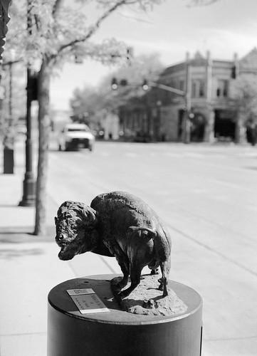 Bison, Main Street, Sheridan