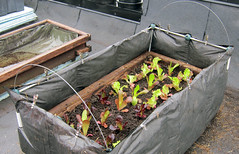 Image by Johanne Daoust (johanne_daoust) and image name Insulated bed roof May 2019 photo  about Created an insulated bed to increase the soil temperature.