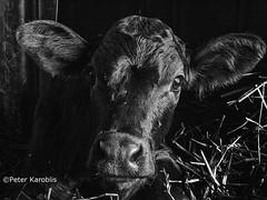 Haus-und Hoftiere / house and farm animals