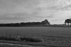 Allee, zwart en wit (135FJAKA_2329)