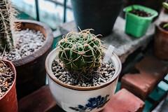 Close up shot of small cactus