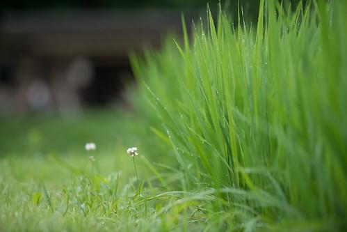 20190709 Yotsuya Terraced Rice Paddy 2