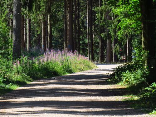 Waldweg Lütsche