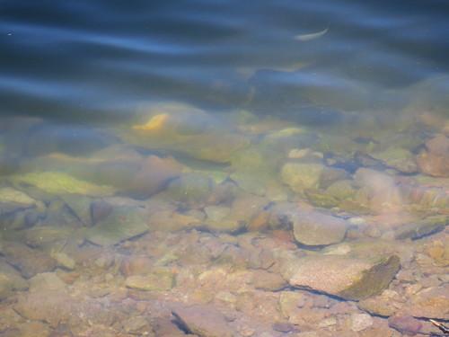 Steine in Lütsche und Fischlein